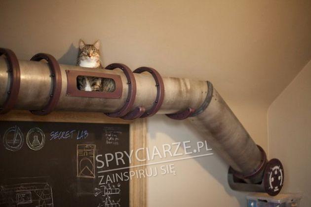 Niektórzy dla swoich kotów zrobią wiele