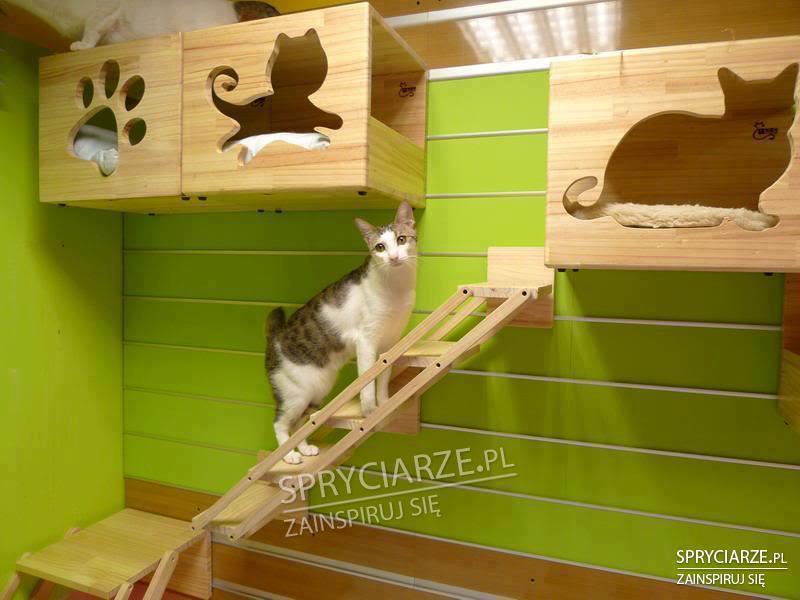 Domki dla koteczków